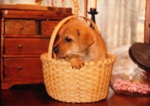 tom in basket