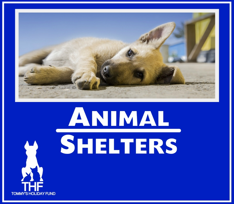 Animal Shelters Graphic 1