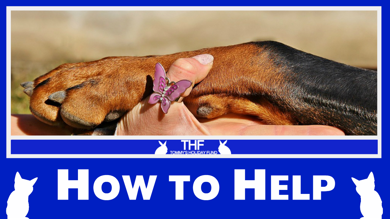 How to help animals 64