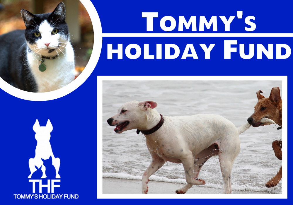 THF Graphic dogs cat